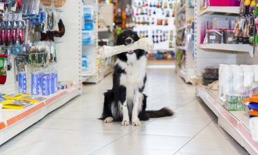 Co można znaleźć w sklepach zoologicznych?