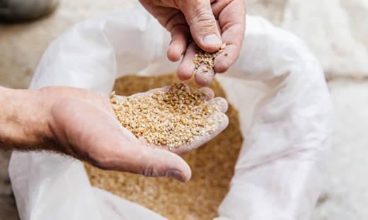 Zmiana wartości odżywczych młóta browarnianego w procesie suszenia i kiszenia